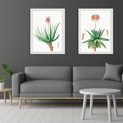 Prints for the Home